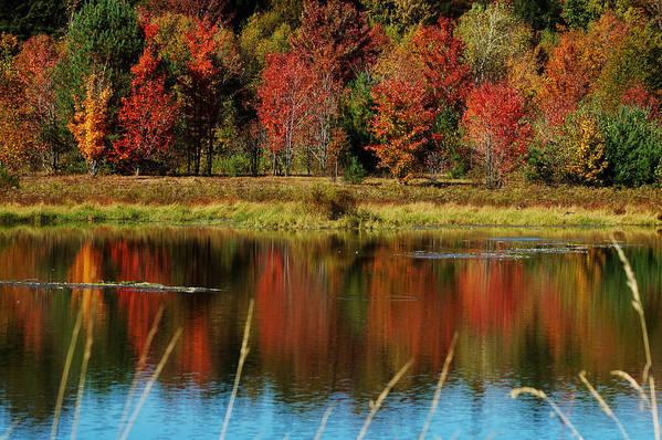 Autumn Art Print featuring the photograph Fall Splendor by Linda Murphy