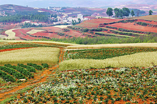 China Art Print featuring the photograph Fields of the Redlands-1 by Marla Craven