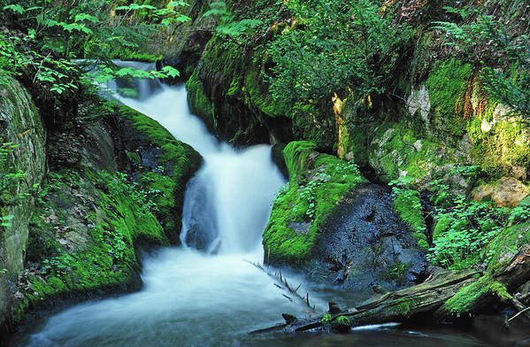 Silver Lead Creek Flows Softly Through A Michigan Hill Side Art Print featuring the photograph Flowing Softly by Bill Morgenstern