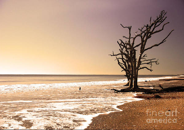 Trees Art Print featuring the photograph For Just One Day by Dana DiPasquale