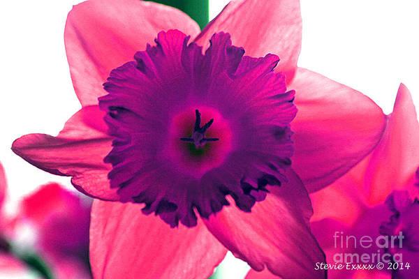 Pink Fuchsia Bloom Flower Daffodil Edit Photograph Digital Modern Edge Nature Art Print featuring the photograph Fuchsia by Stevie Ellis