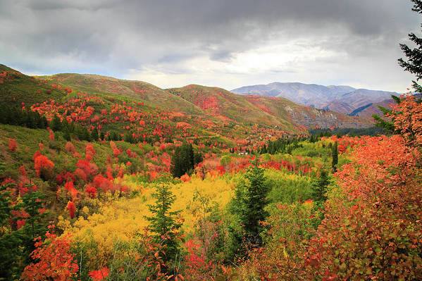 Autumn Art Print featuring the photograph Full-Blown Autumn in the Wasatch Mountains by Dan Pearce