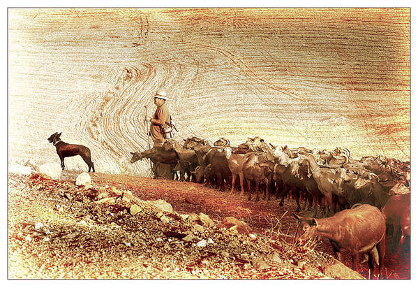 Goats Art Print featuring the photograph Goatherd by Mal Bray