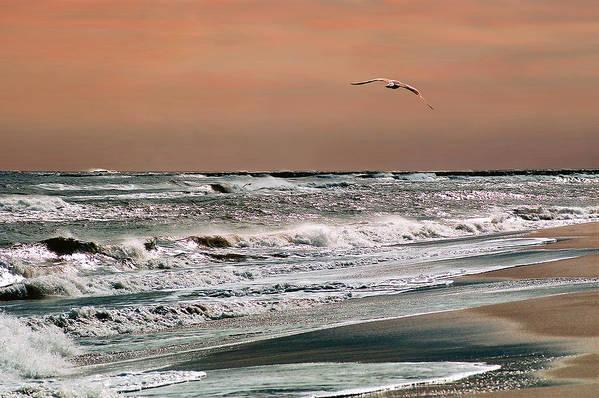 Seascape Art Print featuring the photograph Golden Shore by Steve Karol