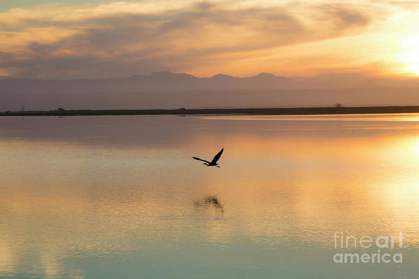 Heron Art Print featuring the photograph Heron at sunset by Sheila Smart Fine Art Photography