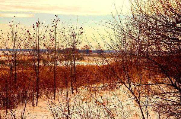 Winter Art Print featuring the photograph Late Winter at Emiquon by Helen ONeal
