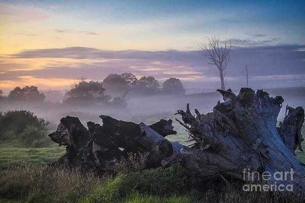 Morning Art Print featuring the photograph Morning mist by Sheila Smart Fine Art Photography