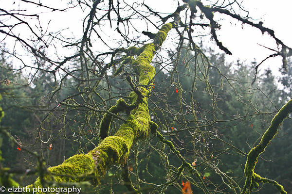 Moss Art Print featuring the photograph Mossy Tree Branch by Liz Santie