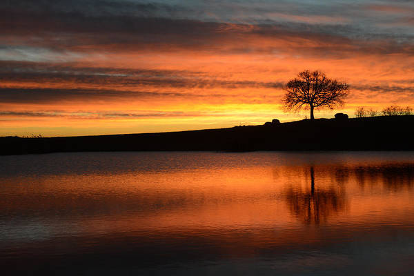 Tree Art Print featuring the photograph Oak At Sunrise by Andrea Gabrieli