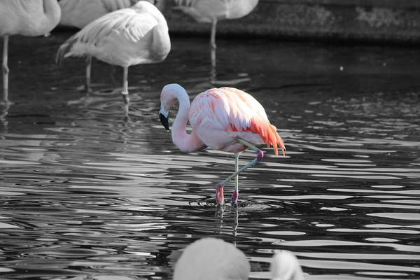 Palm Desert California Art Print featuring the photograph Pinky by Colleen Cornelius