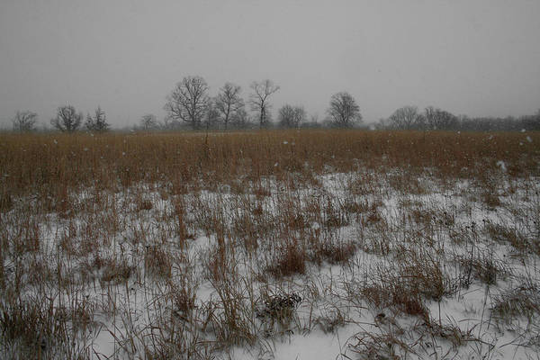 Landscape Art Print featuring the photograph Prairie Snow by Dylan Punke