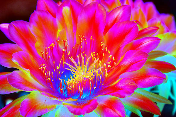 Flower Art Print featuring the photograph Psychedelic Pink Flower by Richard Henne