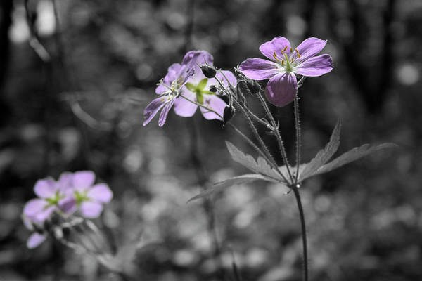 Wildflowers Art Print featuring the photograph Quiet Gatherings by Dylan Punke