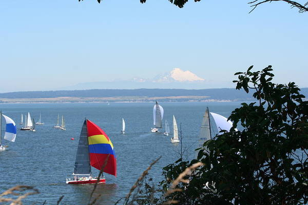 Sailboats Art Print featuring the photograph Race Week 2008 BO1053 by Mary Gaines