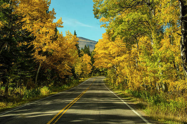 Road Art Print featuring the photograph Road to East Glacier by Roy Nierdieck