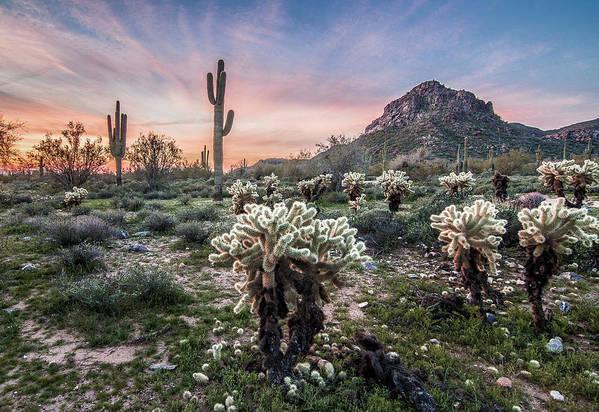 Landscape Art Print featuring the photograph Sonoran Sunrise by Jim Painter