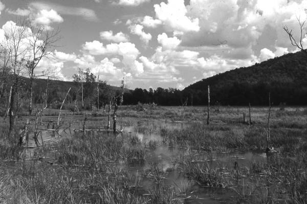 Ansel Adams Art Print featuring the photograph swamp1-OEM by Curtis J Neeley Jr