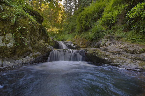 Sweet Creek Falls Trail Complex Art Print featuring the photograph Sweet Little Waterfall by David Gn