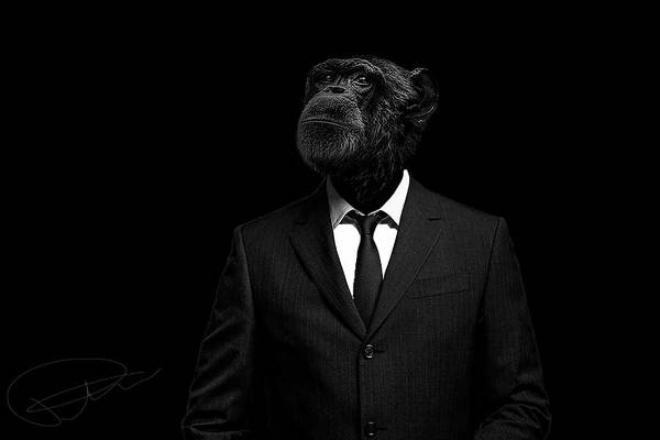 Chimpanzee Art Print featuring the photograph The interview by Paul Neville