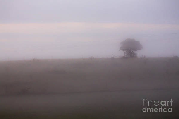Tree Art Print featuring the photograph Tree in mist in paddock by Sheila Smart Fine Art Photography