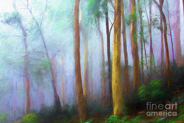 Trees In Mist Art Print featuring the photograph Trees in mist by Sheila Smart Fine Art Photography