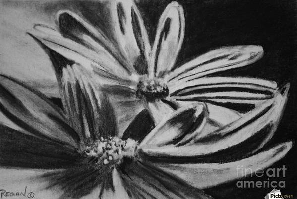Flowers Art Print featuring the drawing Two Flowers by Regan J Smith