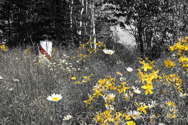 Landscape Art Print featuring the photograph UP Wildflowers II by Dylan Punke