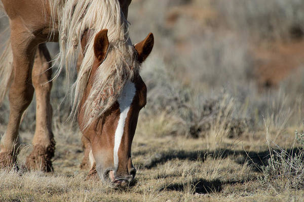 Cody Art Print featuring the photograph Wild Horse by Frank Madia