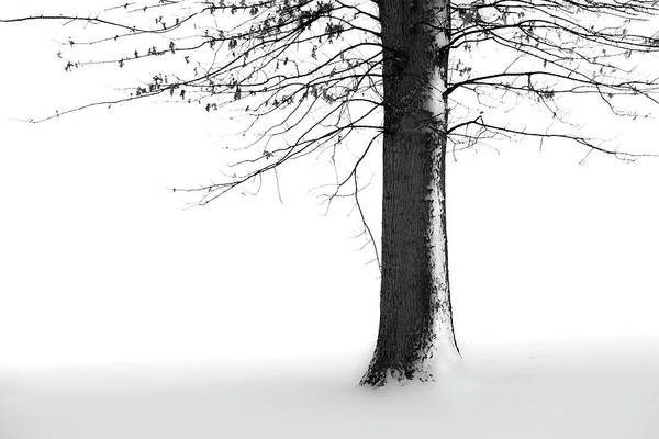 Winter Art Print featuring the photograph Winter Solitude by Marla Craven