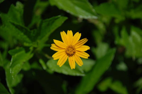 Macro Art Print featuring the photograph Yellow by Rob Hans