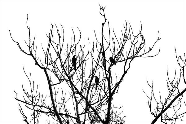 Black And White Art Print featuring the photograph 3 Birds by Tom Romeo