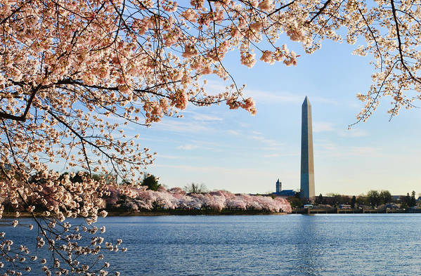 Tidal Basin Art Print featuring the photograph Washington Dc Cherry Blossoms And by Ogphoto