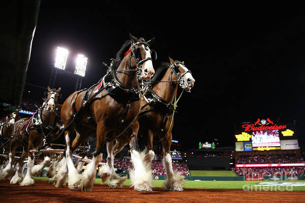 Horse Art Print featuring the photograph World Series - Boston Red Sox V St by Ronald Martinez
