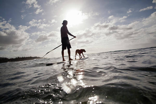 Pets Art Print featuring the photograph A Man And His Dog On A Stand Up Paddle by Noel Hendrickson