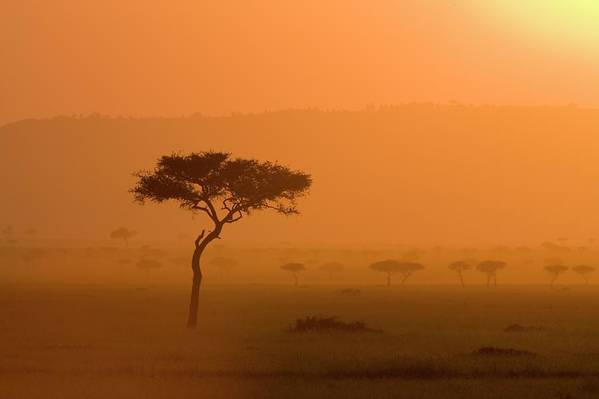 Tranquility Art Print featuring the photograph Acacia Tree At Sunset, Masai Mara by James Hager / Robertharding