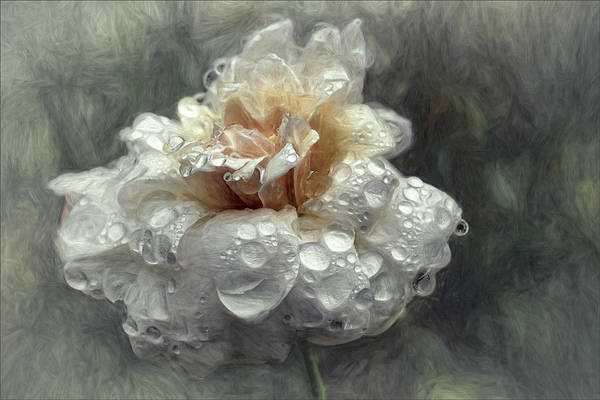 Flower Art Print featuring the photograph After The Shower... by Gilbert Claes