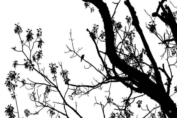 Silhouette Art Print featuring the photograph Bird in Tree Kingston Point Park by Tom Romeo