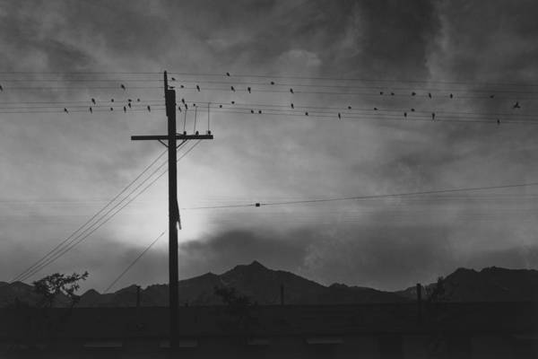 Built Structure Art Print featuring the photograph Birds On Wire, Evening by Buyenlarge