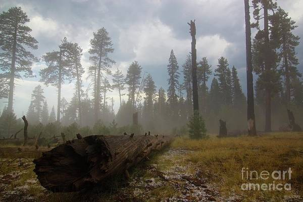 Burnt Art Print featuring the photograph Burned Trees At Lassen Volcanic by Victor De Souza