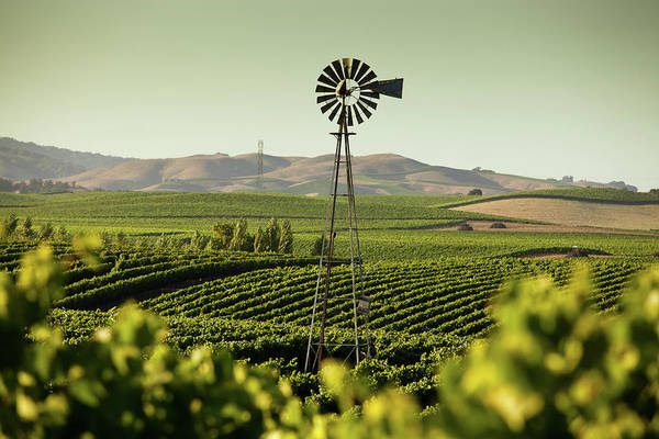 Sonoma County Art Print featuring the photograph California Wine Country by Halbergman