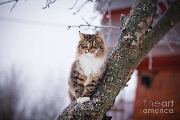Play Art Print featuring the photograph Cat Outdoors In The Winter Is On The by Dezy
