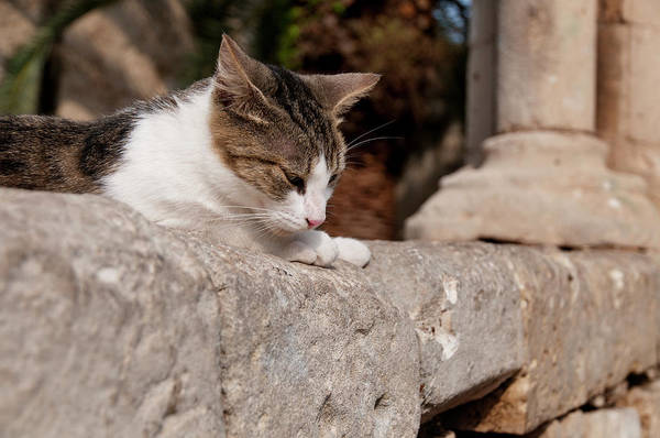 Pets Art Print featuring the photograph Cat Sunning Itself On Stone Wall by Stuart Mccall