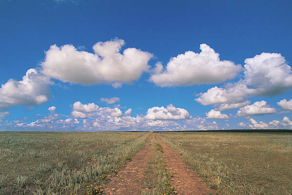 Grainy Art Print featuring the photograph Dirt Road On Prairie With Cumulus Sky by Mimotito