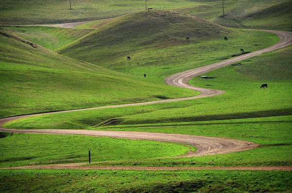 Tranquility Art Print featuring the photograph Dirt Road Through Green Hills by Mitch Diamond