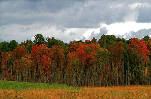 Art Print featuring the photograph Fall Trees off Rte 23A by Tom Romeo
