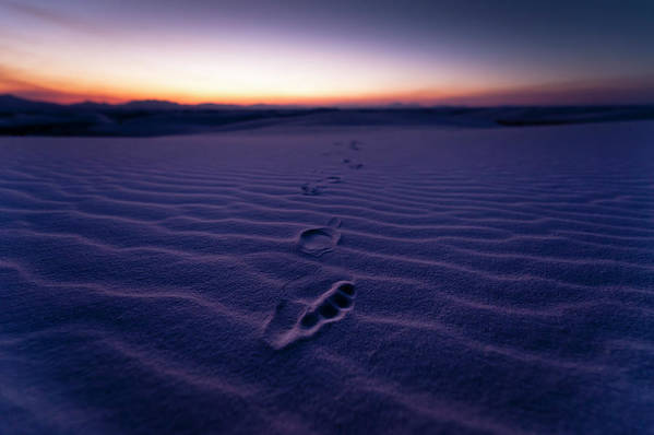 New Mexico Art Print featuring the photograph Footprint On Dunes by Son Gallery - Wilson Lee