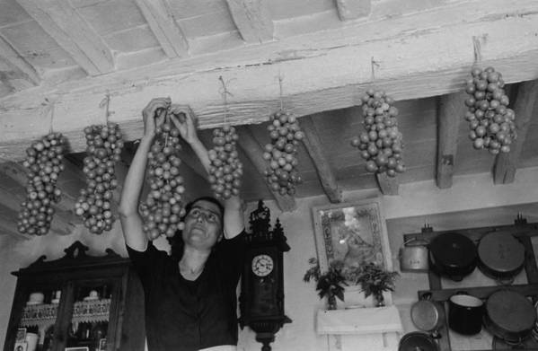 Hanging Art Print featuring the photograph Hanging Tomatoes by Haywood Magee