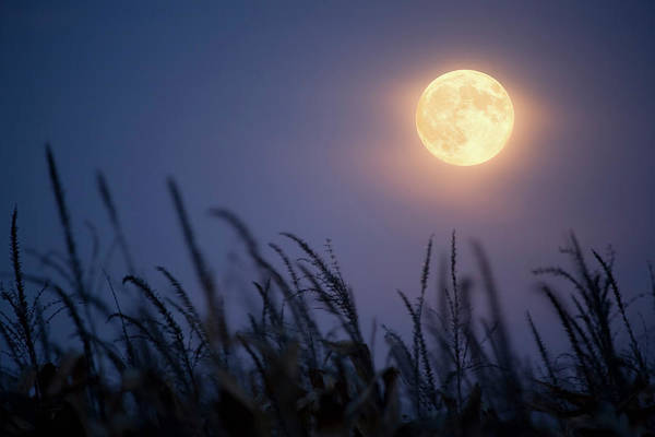 Sky Art Print featuring the photograph Harvest Moon by Jimkruger