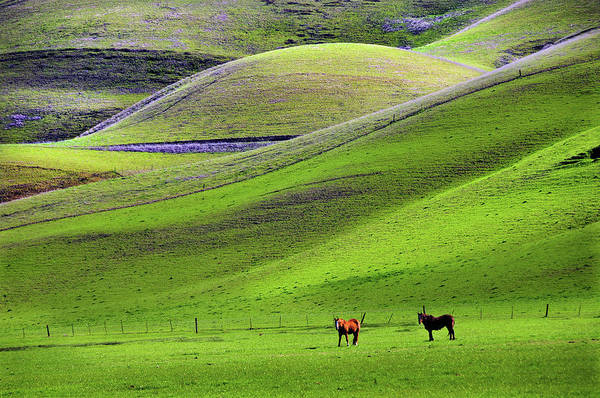 Horse Art Print featuring the photograph Horses In Hill Country by Mitch Diamond