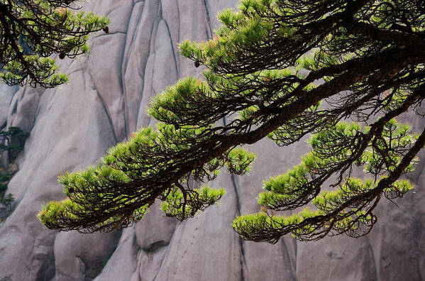 Chinese Culture Art Print featuring the photograph Huang Shan Landscape, China by Mint Images/ Art Wolfe
